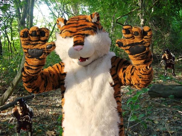 Captured Tiger